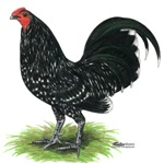 OE Mottle Cock