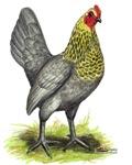 Lemon Blue OE Hen
