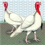 White Turkeys2