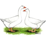 Tufted Geese