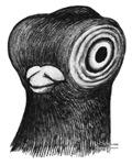 Vienna Shortface Pigeon