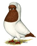 Red Nun Pigeon