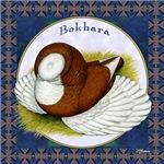 Bokhara Nest