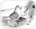 Saxon Shield Pigeon 1973