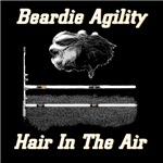 Beardie Agility-Hair in the Air