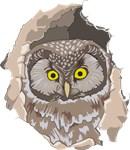 Owl Shirts