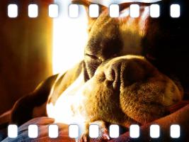 Boston Sun Dog