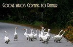 Goose Who's Coming To Dinner