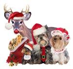 Yorkshire Terrier Santa Family