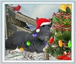 Scottish Terrier Decorates Christmas Tree