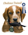 Welsh Springer Spaniel Obedience Trained