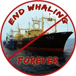 End Whaling Forever
