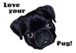 Love Your Pug