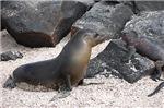 Seal Meets LiZard