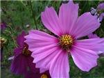 Pretty & Pink in the Garden
