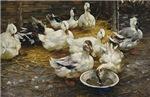 Ducks in the Barn