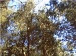Sky Thru Trees