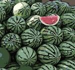 Watermelon Fine Fruit Art