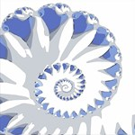 Blue and White Seashell