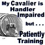 Cavalier Agility