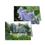 Arboretum greeting cards