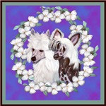 Chinese Crested Pair
