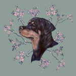 Rottweiler female Head Study
