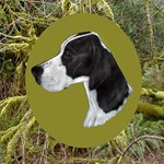 English Pointer Head Study