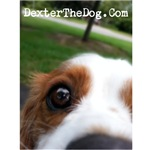 Dexter The Dog's View On Life