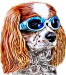 Doggles Fashion