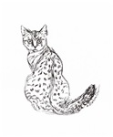 Is it Just a Spotted Cat?