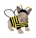 Halloween French Bulldog Bumble Bee