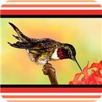 Ruby Neck Hummingbird Tangerine