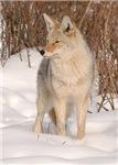 Winters Dog