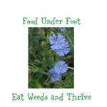 Eat Weeds and Thrive Chicory