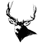 Buck deer head