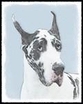 Great Dane - Multiple Illustrations