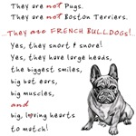 THEY are not Pugs (Serious Frenchie)