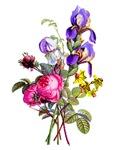 Jean Louis Prevost Bouquet