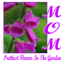 PRETTIEST FLOWER IN THE GARDEN T-SHIRTS AND GIFTS