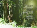 Serenity Prayer Redwoods