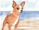 Chihuahua stuff