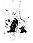 Spotted Panda