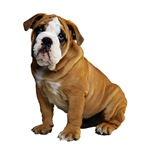 Dog Breed Gifts for Dog Lovers
