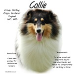 Collie (rough tri)
