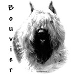 Bouvier Charcoal