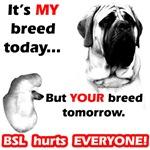 Anti BSL