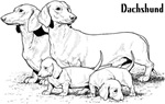 Dachshund Family Design