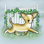 Garden Fence Chihuahua- Smooth Tan Running