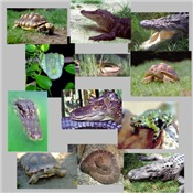 Reptile Photo Gifts